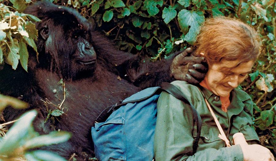 WW-Dian-Fossey